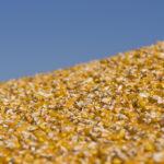 Is the Biofuels Honeymoon Finally Over?