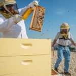 Why Cities Should Invest in Beekeeping