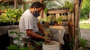 Rosario, Argentina Uses Urban Farming to Tackle Economic and Climate Crises